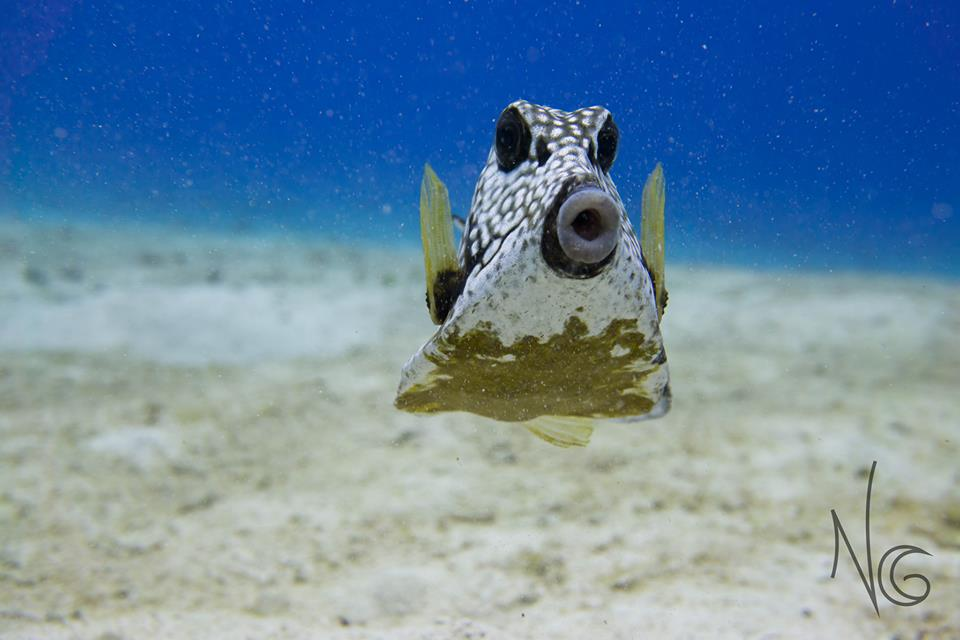 My first and not last underwater photography internship in Cozumel Mexico ??