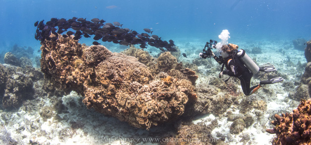 Responsible tourism- steps to enjoying the reef without damaging it